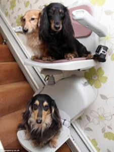 Dog stairlift for 3 dachshunds